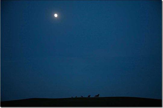 Mustangs- Wild Horses - Melissa Farlow