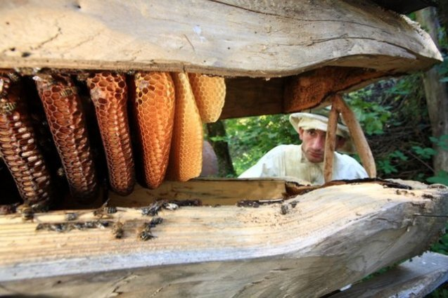 Omar Dolidze, 28, a local beekeeper in Ajara does regular maintanance at his apiary.